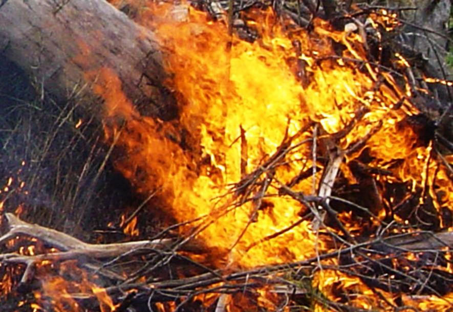 bushfire-research